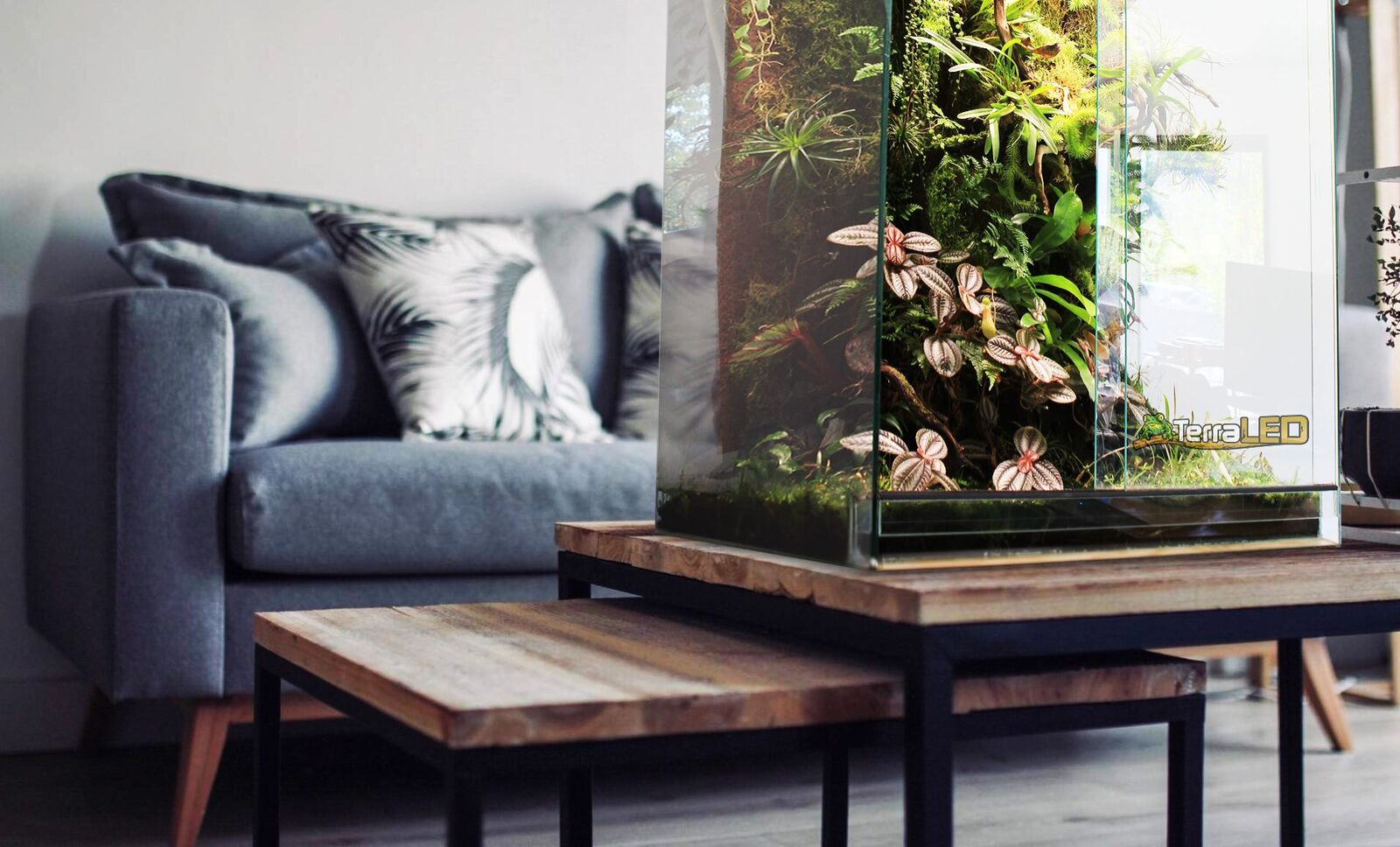 terrarium-terraled.jpeg