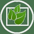Cadres végétaux